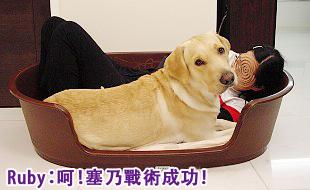 Ruby的寵物床床危機11.jpg