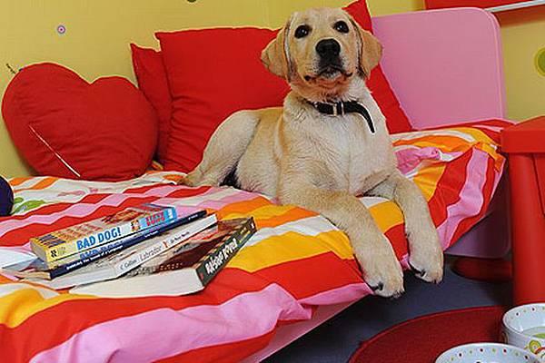 dog-hotel-pic-wns-532698725
