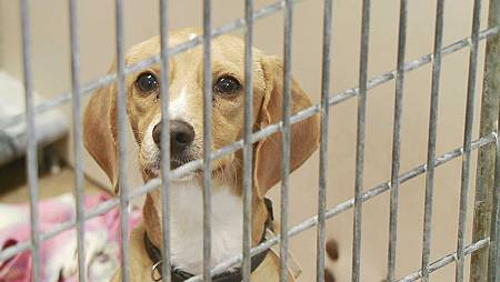 dog-pet-adoption