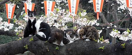 花見貓-1