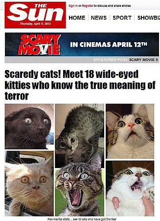 貓咪嚇破膽