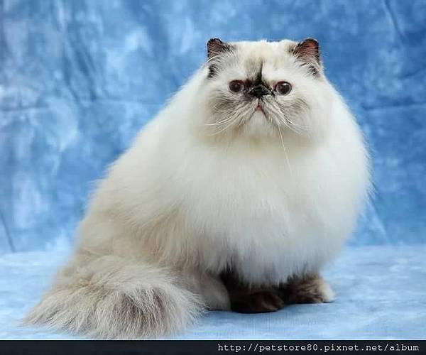貓咪美容-美眉