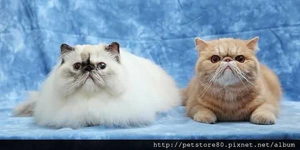 貓咪美容-美眉丁丁
