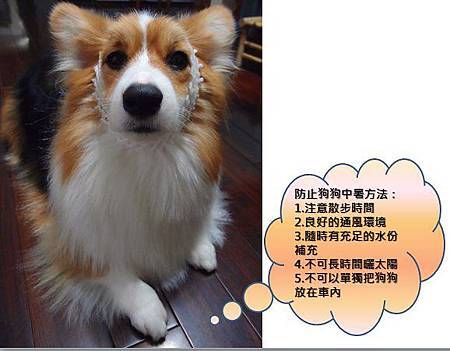 QBoo Hsu