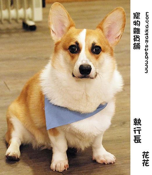 花花名片.JPG