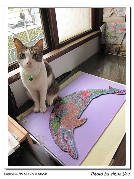 卡卡&LP海豚.jpg