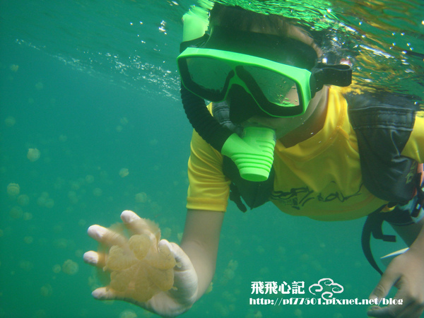 水母3.JPG