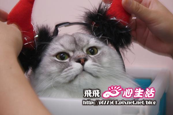 cat-8.jpg