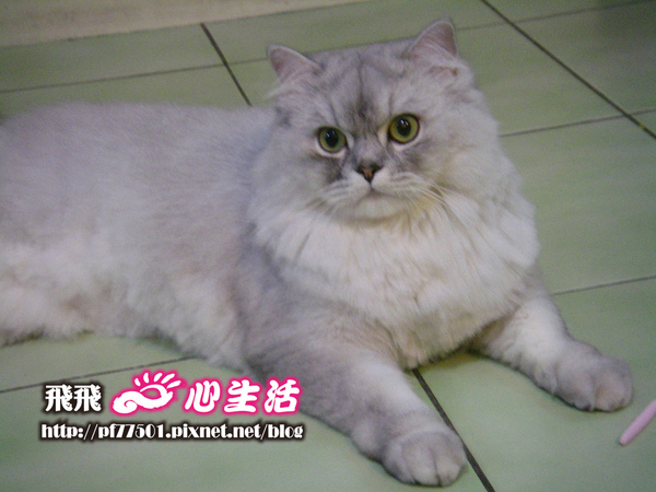 cat-13.jpg
