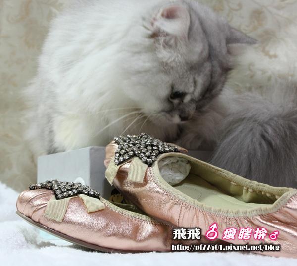 第4-1張鞋子.JPG