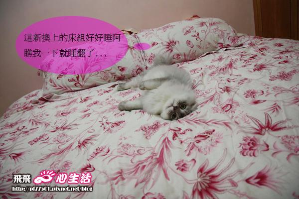 拉其與床_01_.JPG