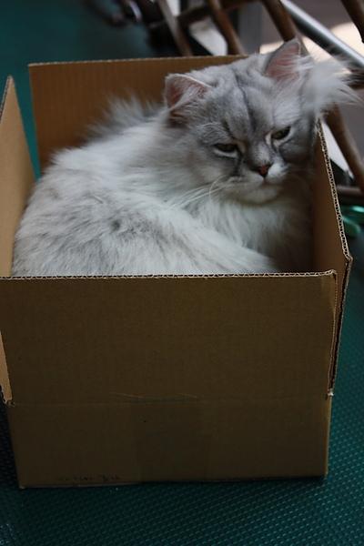 紙箱貓_調整大小.JPG
