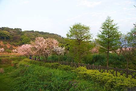 20150405_三芝_Canon_ 118