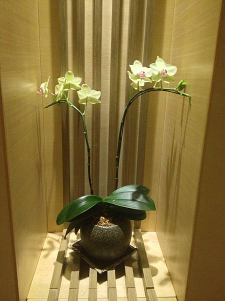11樓走道盆花