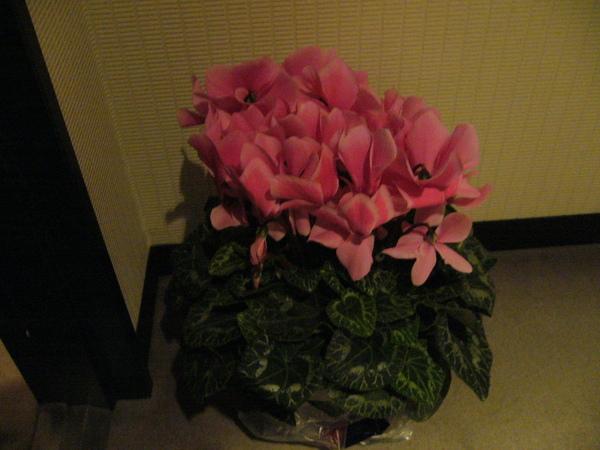 教授送的花