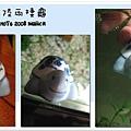 可愛龜龜~