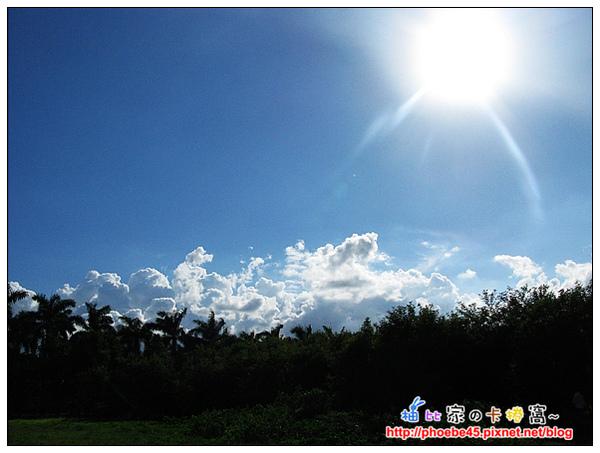 藍天陽光樹木.jpg