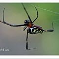 蜘蛛微距....