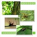 微距小昆蟲