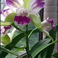 蘭花-2.jpg