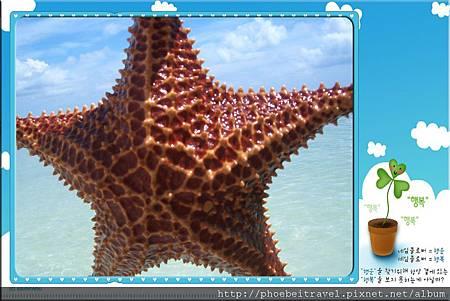 哇~活生生的海星