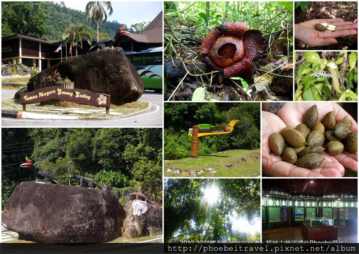 1-加丁國家公園尋找Rafflesia萊佛士花