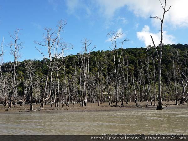 巴哥國家公園七大生態區之一的紅樹林潮間帶區