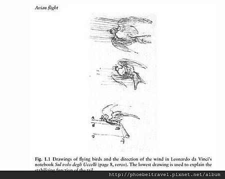 2013-04-23_Avian Flight p.6