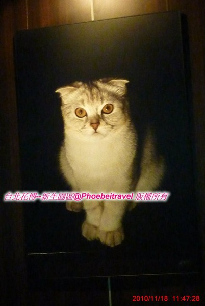 你猜? 我是真貓還假貓?