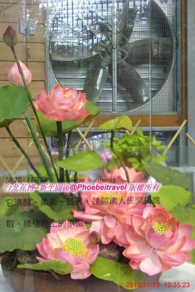 永生不凋的花~台灣第一