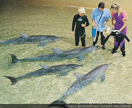 隨同研究人員至棧橋近距離觀察野生海豚