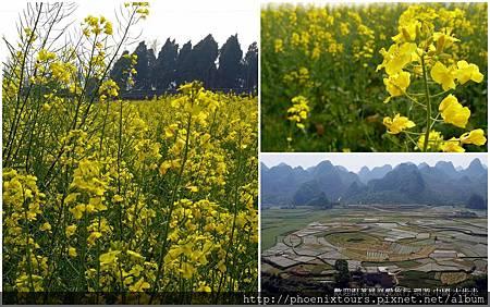 【油菜花開的季節】 在春天五顏六色的花團錦簇中,黃澄澄的油菜花海點綴山間田野,放眼望去格外顯得清新脫俗,在大陸每年更舉辦網友票選最受歡迎的油菜花景點活動。  而最受歡迎的就是陝西漢中的油菜花,這裡屬於盆地地形,每當花開時節,金黃色渲染整個漢中,就好像大型的山水盆栽令人驚艷;而江蘇的興化、雲南的羅平、江西的婺源、湖北的荊門…等自然也是榜上有名,列為十大人氣景點之內。  喜歡純樸自然的田野風情嗎?春暖花開時,不妨到此一遊,絕對讓你讚不絕口。