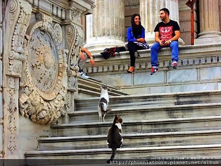 【轉角遇到‧貓】在土耳其最受歡迎的攝影主角除了令人驚嘆的自然與人文景觀外,就是隨處可見的貓咪了。 不怕人的貓咪出沒的地方總緊緊吸引住旅人目光與驚呼,這在樓梯間嬉戲的貓咪們,也瞬間讓許多貓迷們大為驚喜!  →→土耳其番紅花城雙飛風采11日B團 (送吉普車遊)