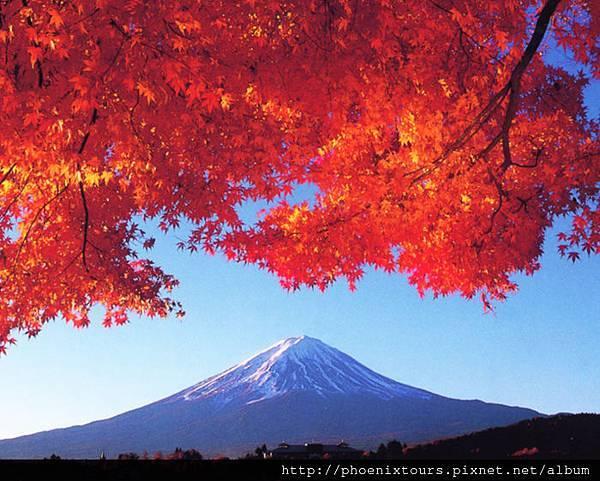 富士山與紅葉(河口湖畔楓)