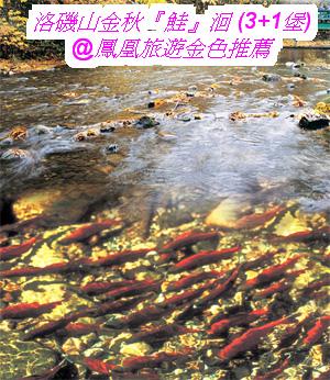 鮭魚迴游_卑詩省旅遊局2.jpg