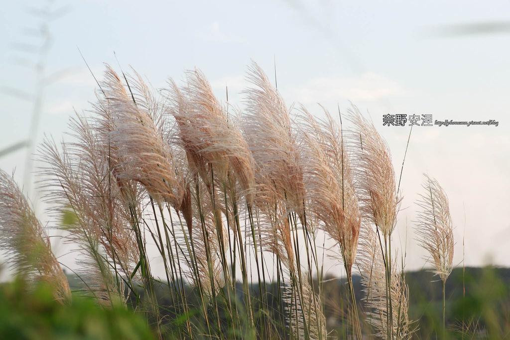 木架山探路草7拷貝.jpg