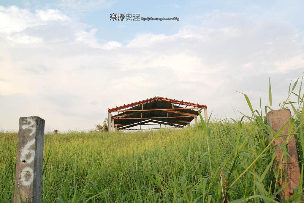 木架山探路草5拷貝.jpg