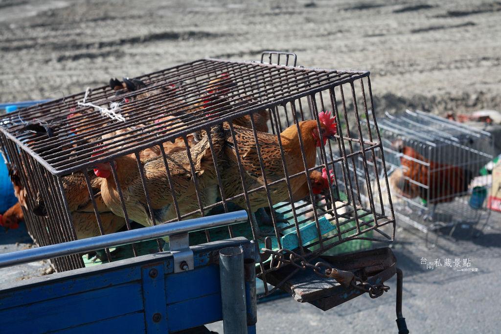 善化牛墟 | 每逢國曆 2、5 、8 號的市集 | 善化區.台南私藏景點 (3)