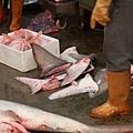 8 鯊魚 (1)