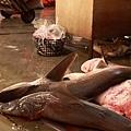 8 鯊魚 (2)