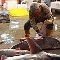 8 鯊魚 (5)