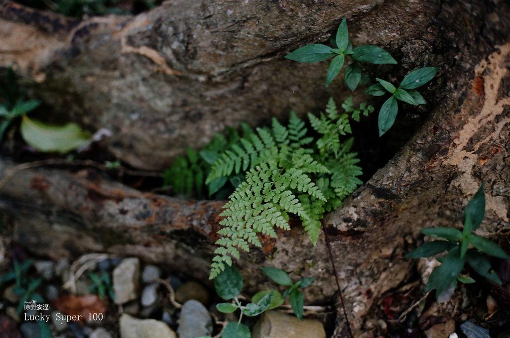 1 新威森林 (2)