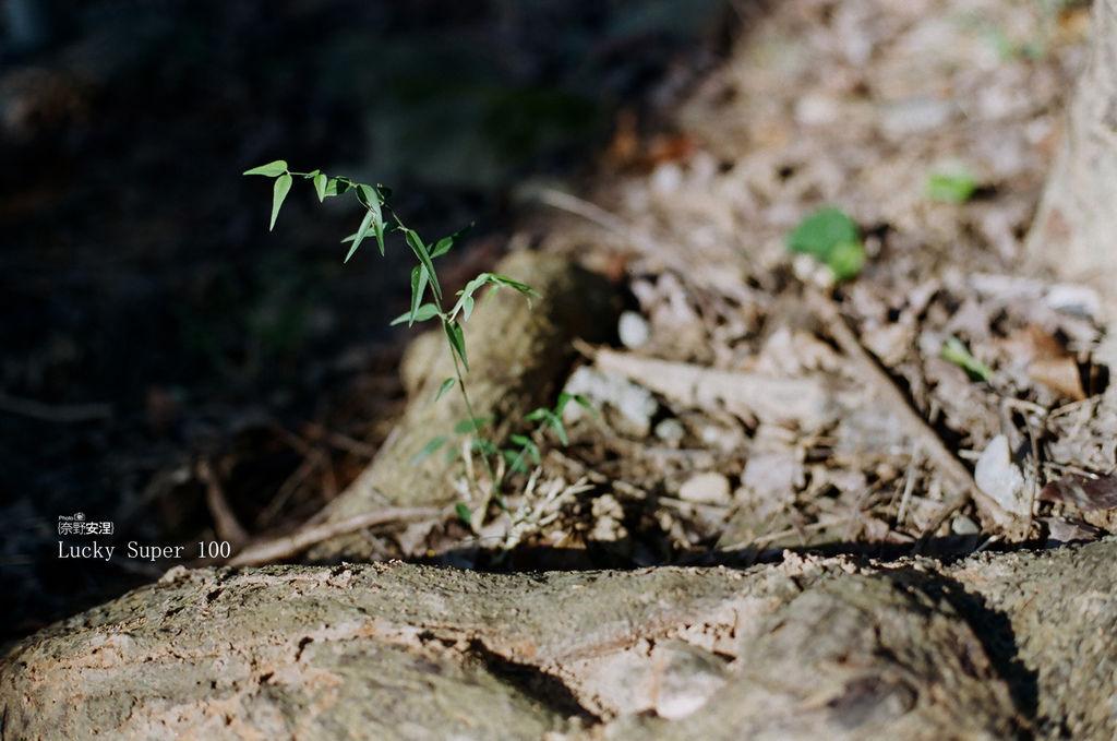 1 新威森林 (4)