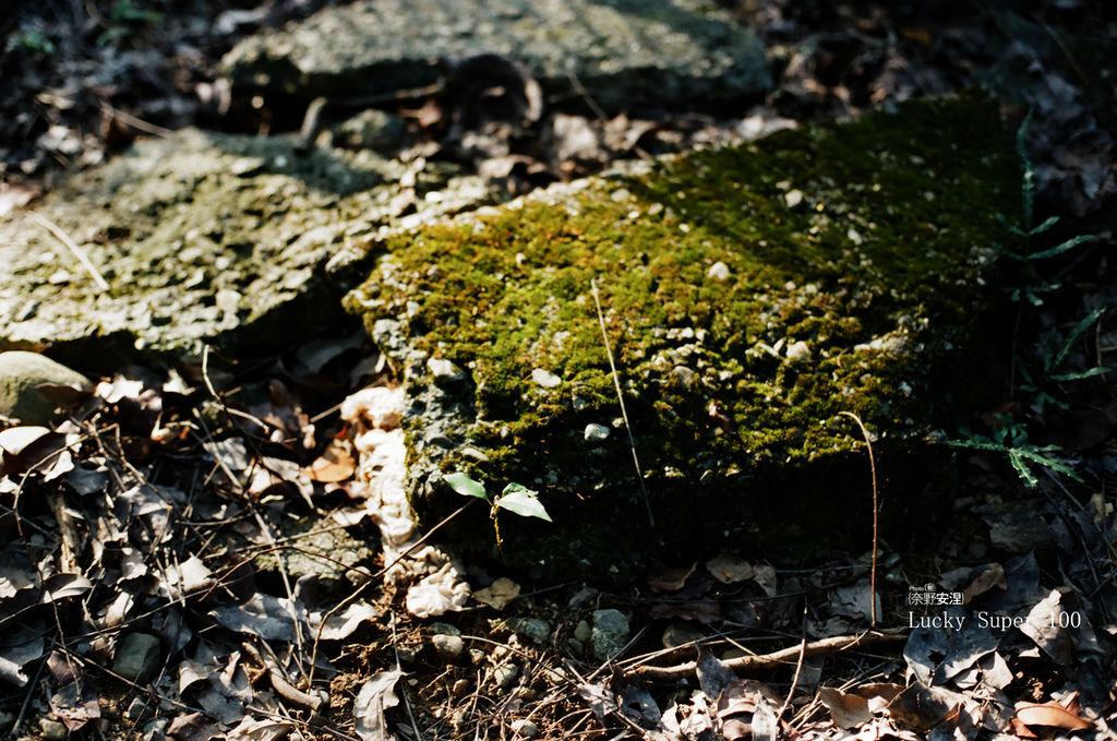 1 新威森林 (5)