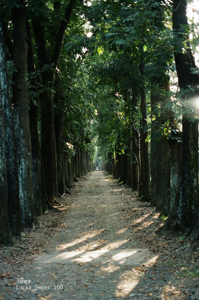 1 新威森林 (6)