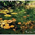 Turtle_Mountain_165_resize