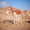 Egypt_079.jpg
