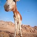 Egypt_080.jpg