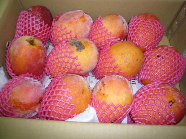 96.6.6.26阿洲水果的枋山頂極芒果