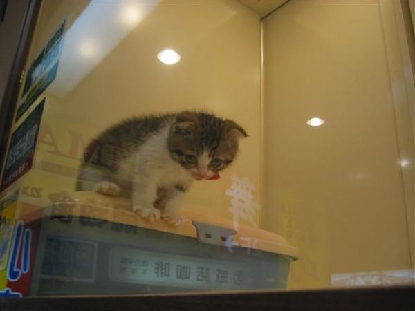 寵物店的小貓